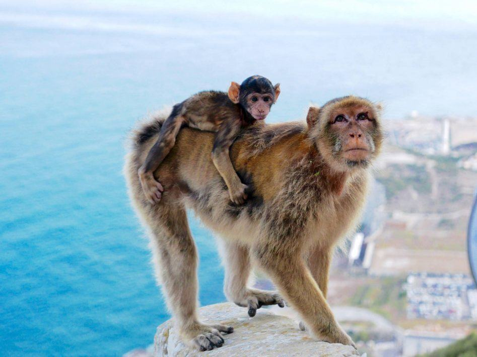 panasonic 4k photo baby monkey gibraltar