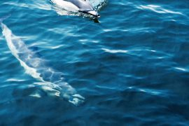 panasonic 4k photo dolphin gibraltar