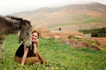 morocco donkey