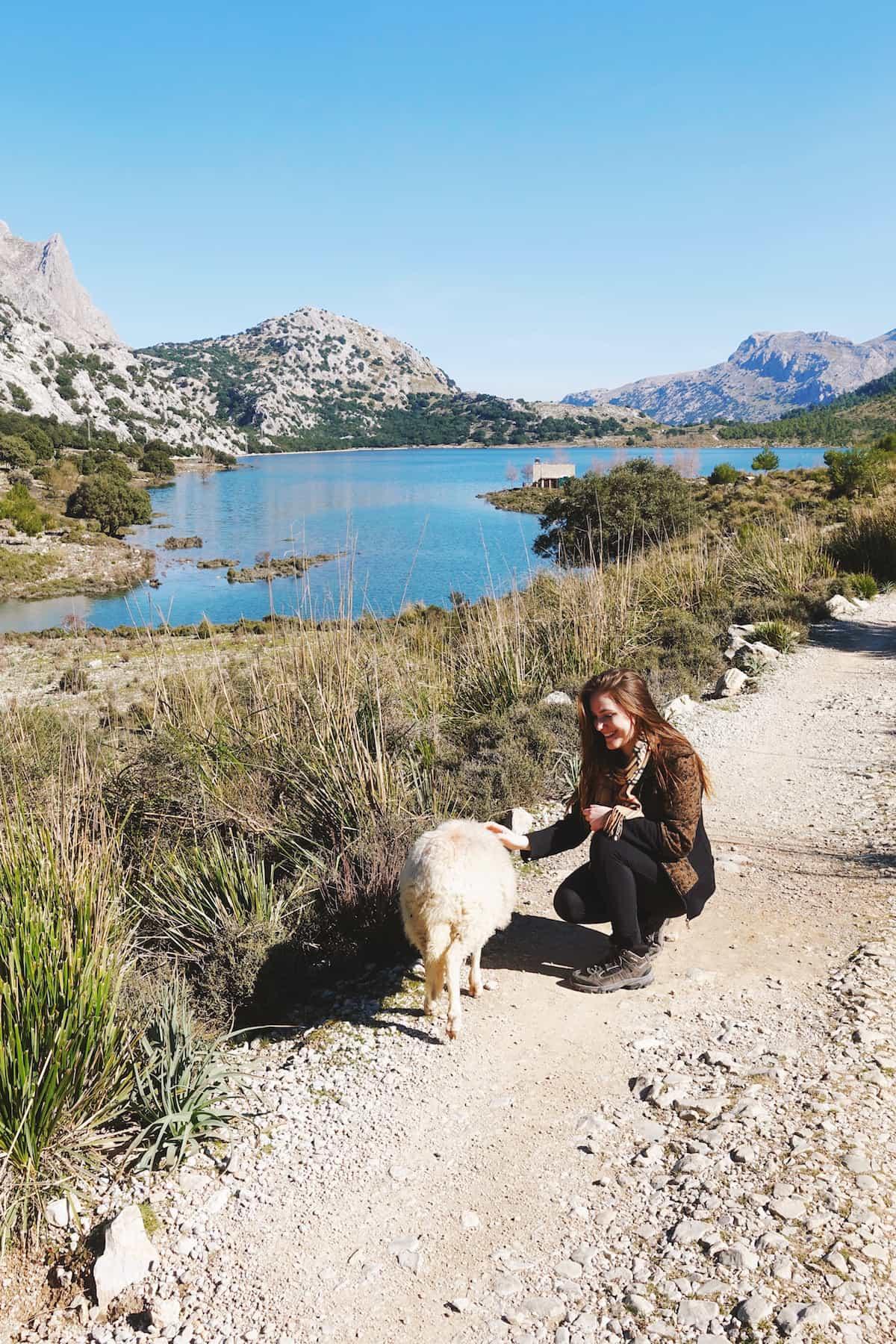 sheep cuber reservoir mallorca serra de tramuntana