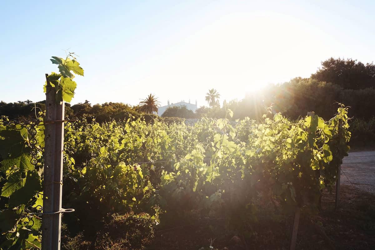 menorca binifadet winery