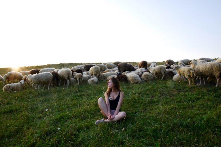 singen germany sheep