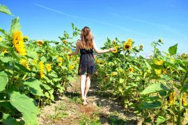 field of sunflowers girl