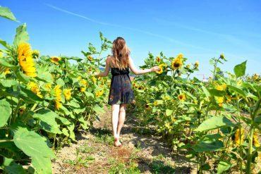 field of sunflowers girl