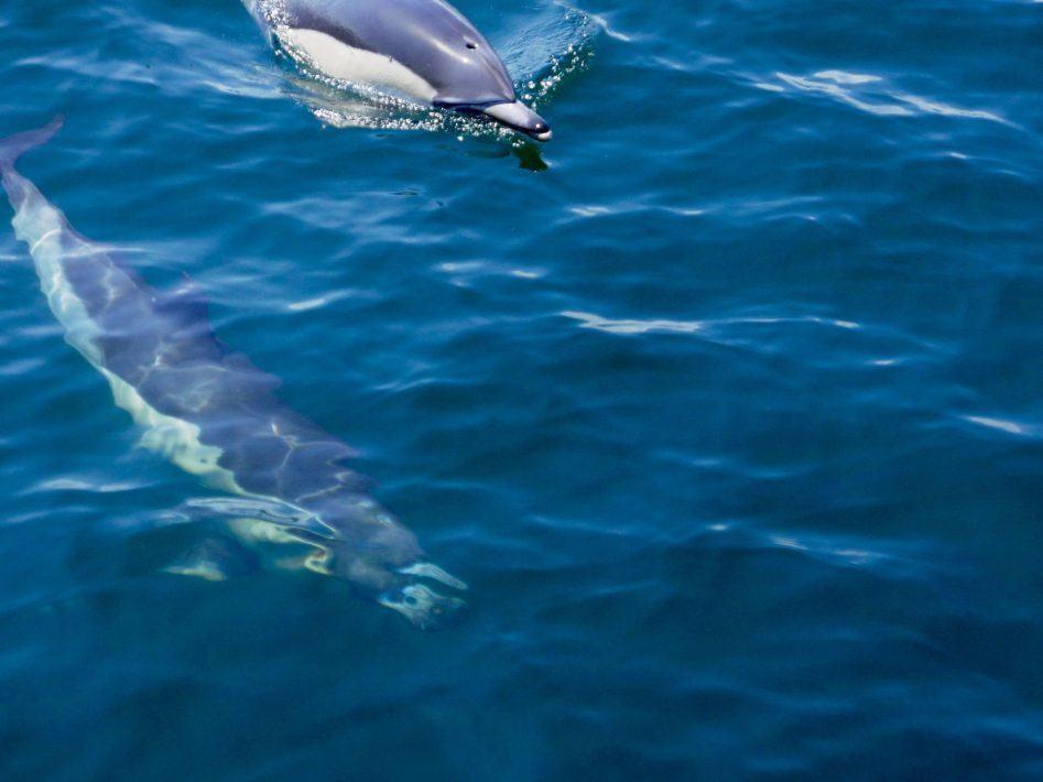 panasonic 4k photo dolphin