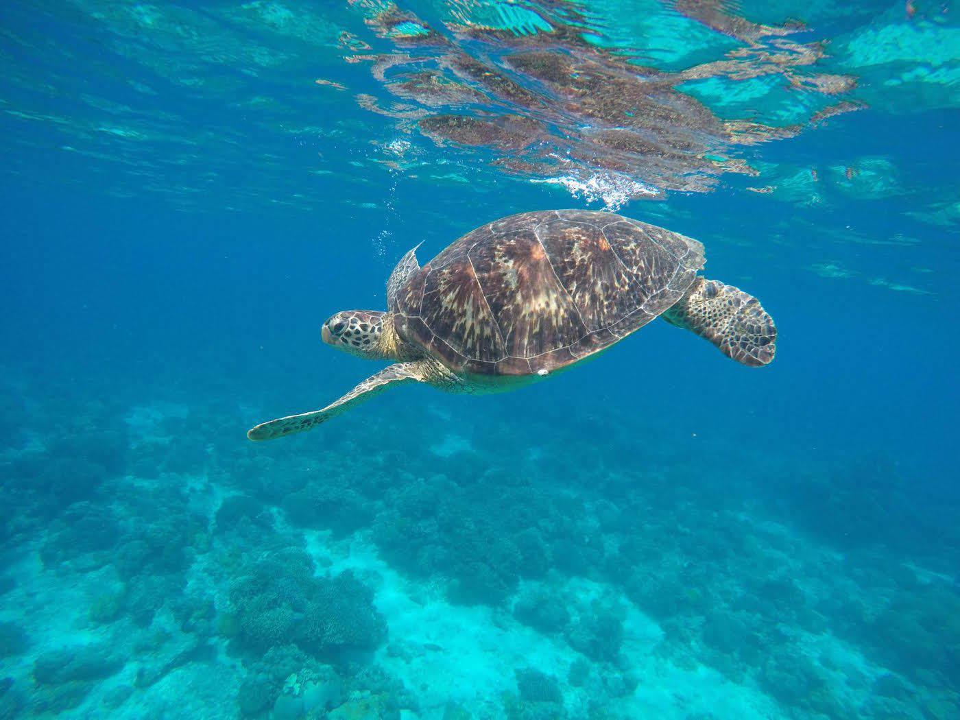 responsible travel diving